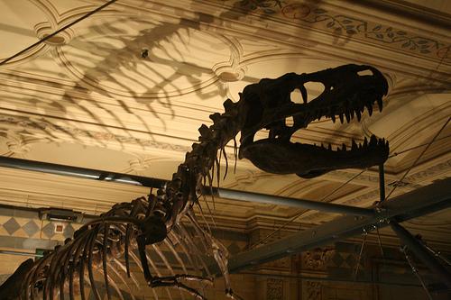 サイアムパラゴン 恐竜イベント