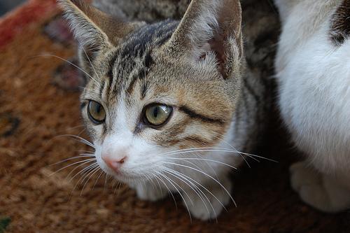 猫カフェホステル プラカノン