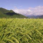 タイのスマート農業