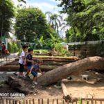 Root Garden At Thong Lor